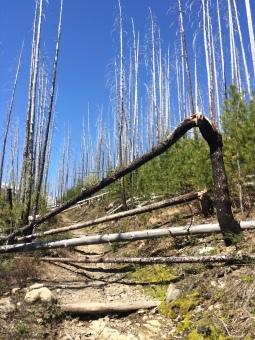 Granite park trail uncleared